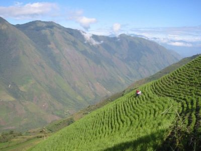 Growing potatoes along the slopes of the Andes presents new challenges for Ecuadorian farmers.
