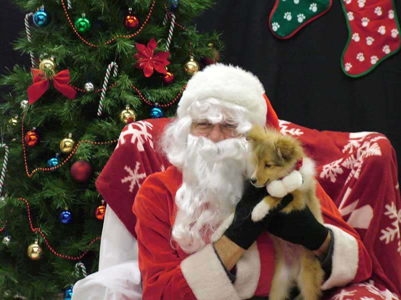 Santa holds a small sheltie