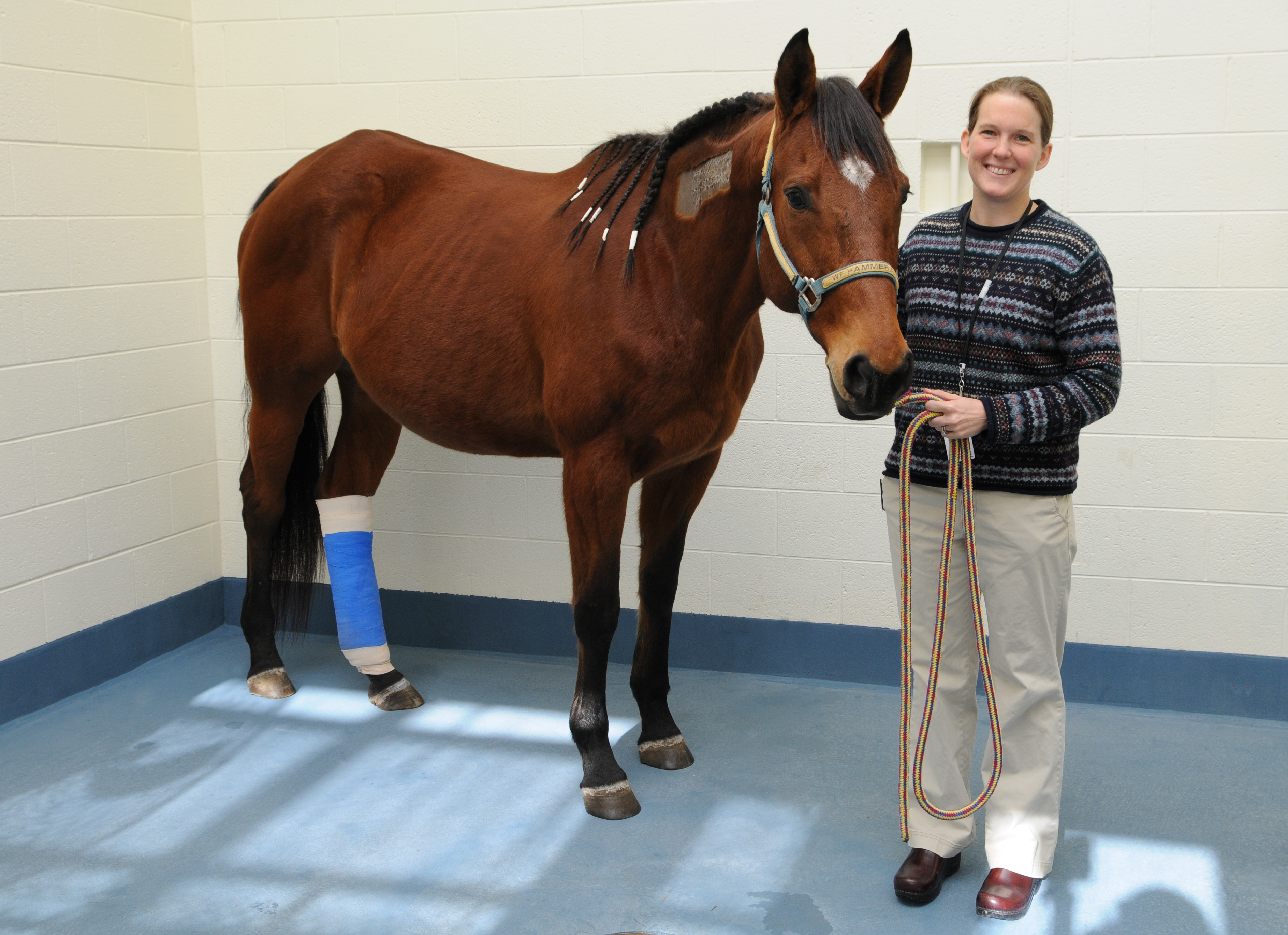 "A recent donation in memory of 15-year-old Hannah George was used to help ""Gracie,"" a therapy horse for abused, neglected and un-wanted children. Gracie is pictured above with Dr. Julie Settlage who assisted with her treatment."