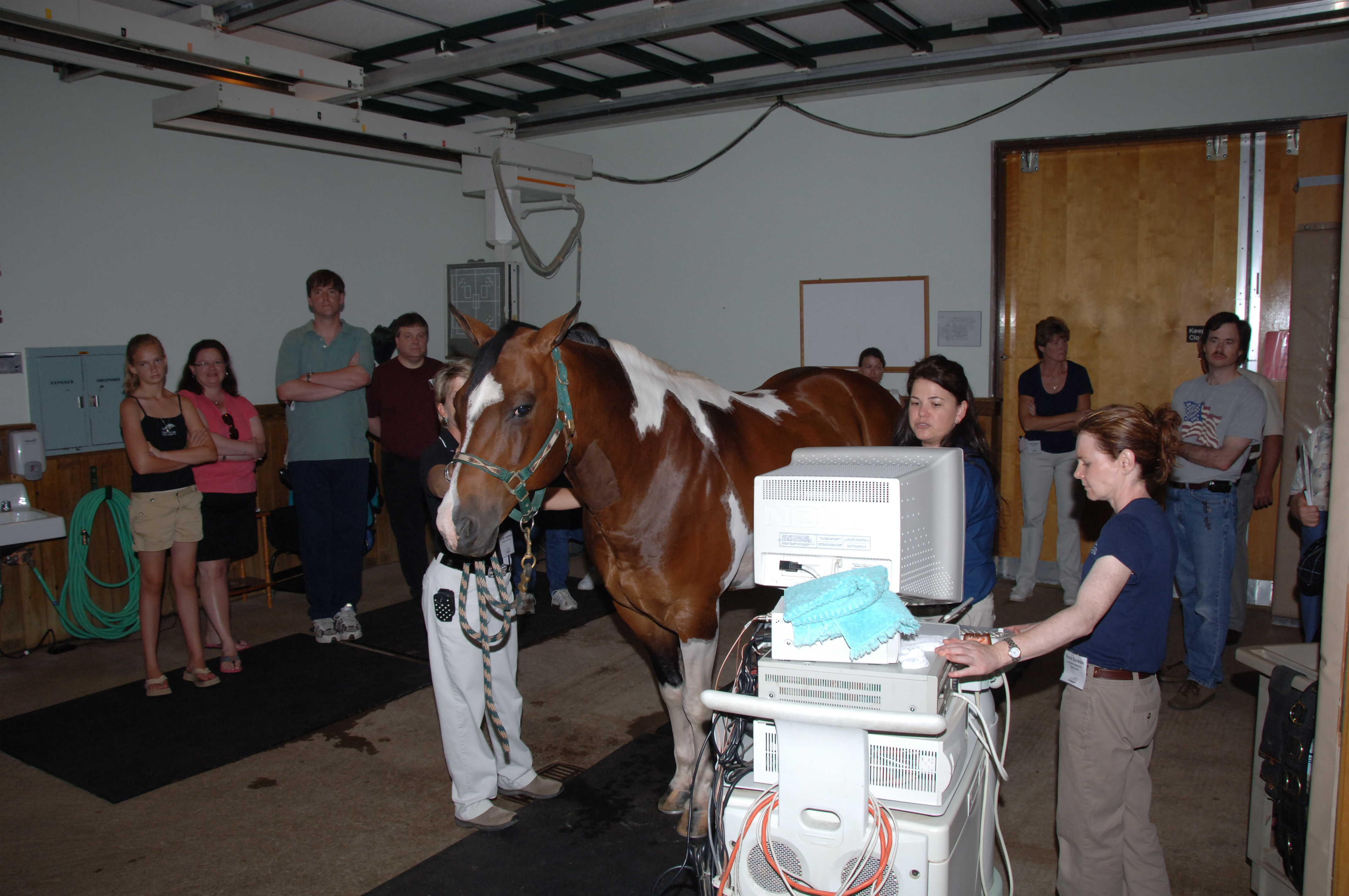 Some of the visitors to the equine medical center's recent open house are able to see how Dr. Anne Desrochers uses state-of-the-art ultrasound equipment to identify health problems in a horse.
