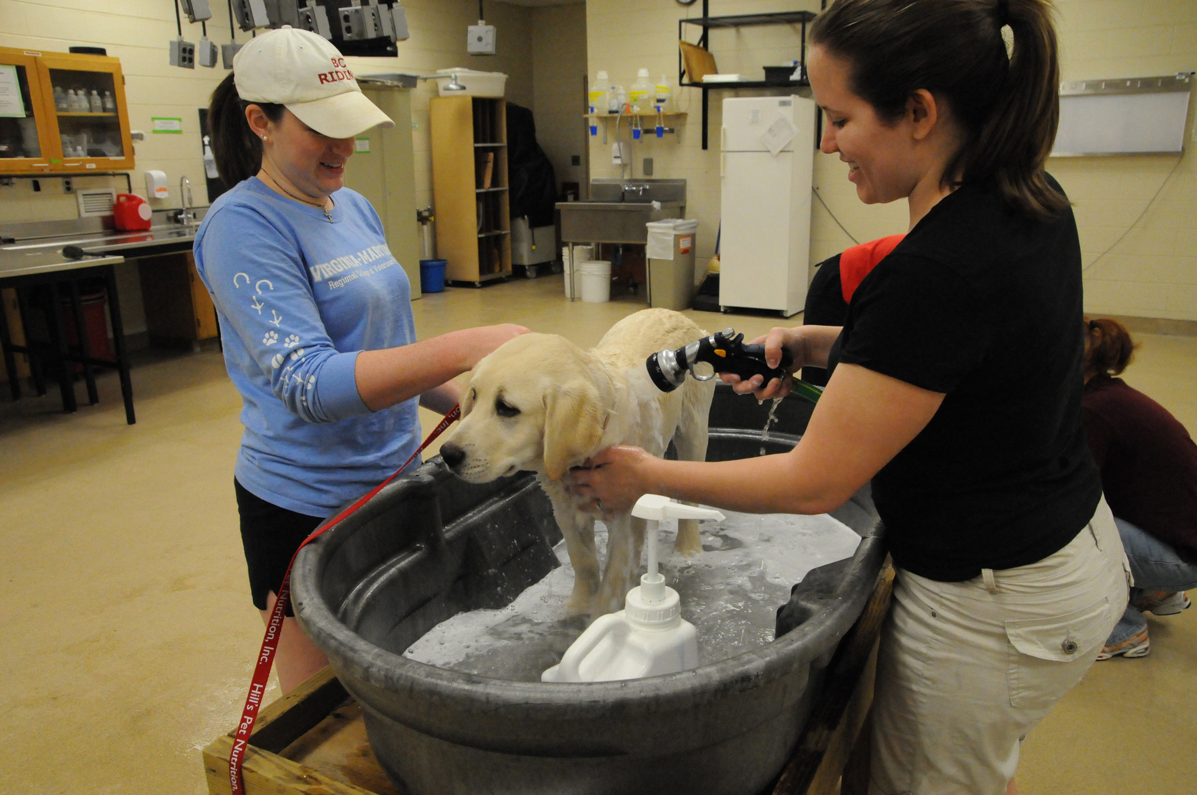Veterinary students wash a dog at last year's event.