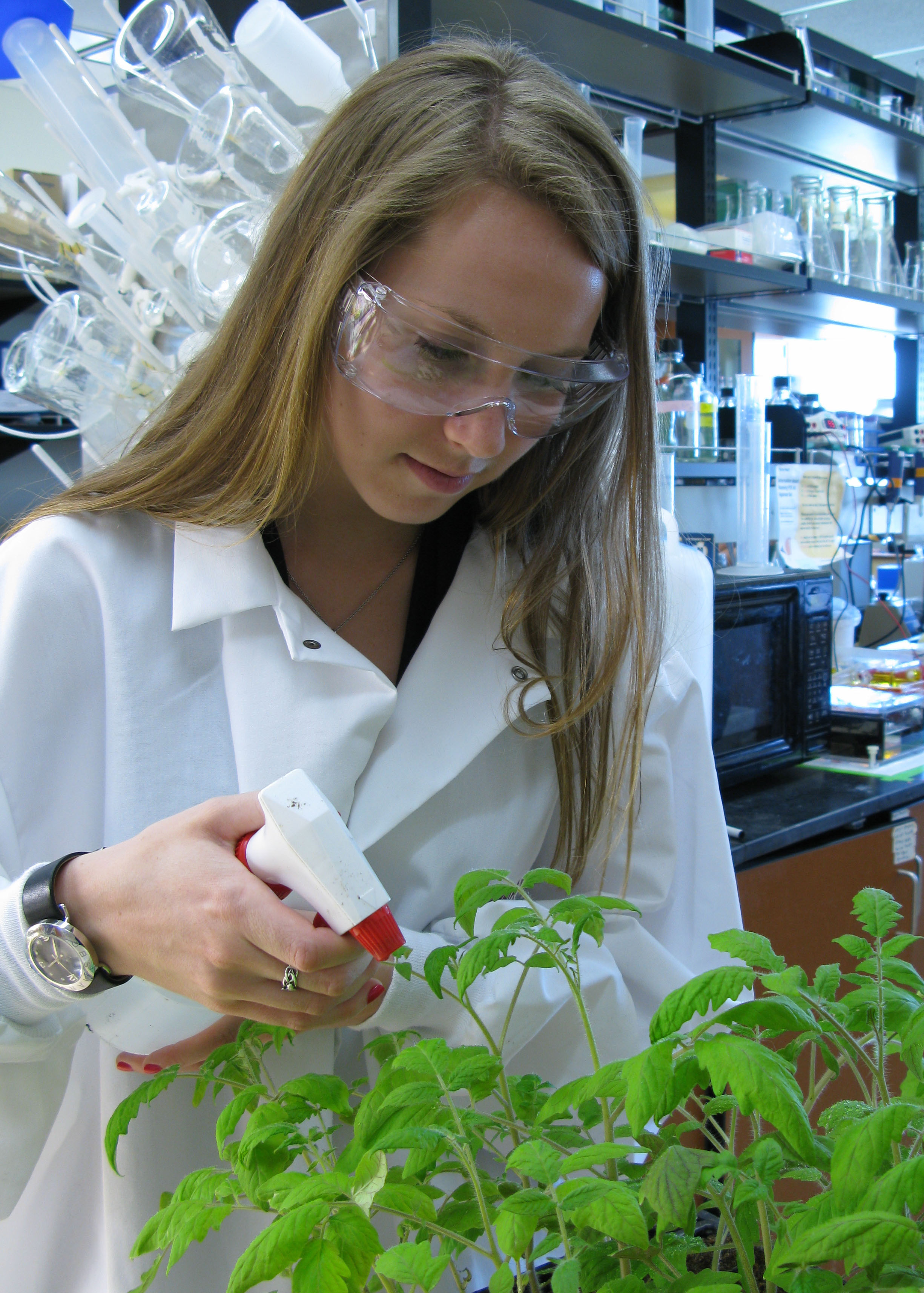 Maureen Farrell, a sophomore majoring in biological sciences in the College of Science, inoculates tomato plants with <em>P. syringae</em> bacteria in the Vinatzer laboratory.
