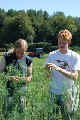 Students harvest herbs at the Dining Services Garden