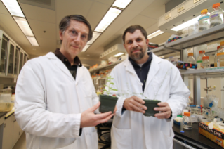 An international collaboration of researchers lead by Brett Tyler (left) and John McDowell have sequenced the genome of a mildew that attacks a laboratory plant used by scientists find ways to grew better and more abundant crops. The mildew is a member of a family of pathogens that cause millions of dollars of crop damage annually and also are related to the organisms that cause Sudden Oak Death, which has devastated forests in the western United States. (Photo by Ivan Morozov, Virginia Bioinformatics Institute)
