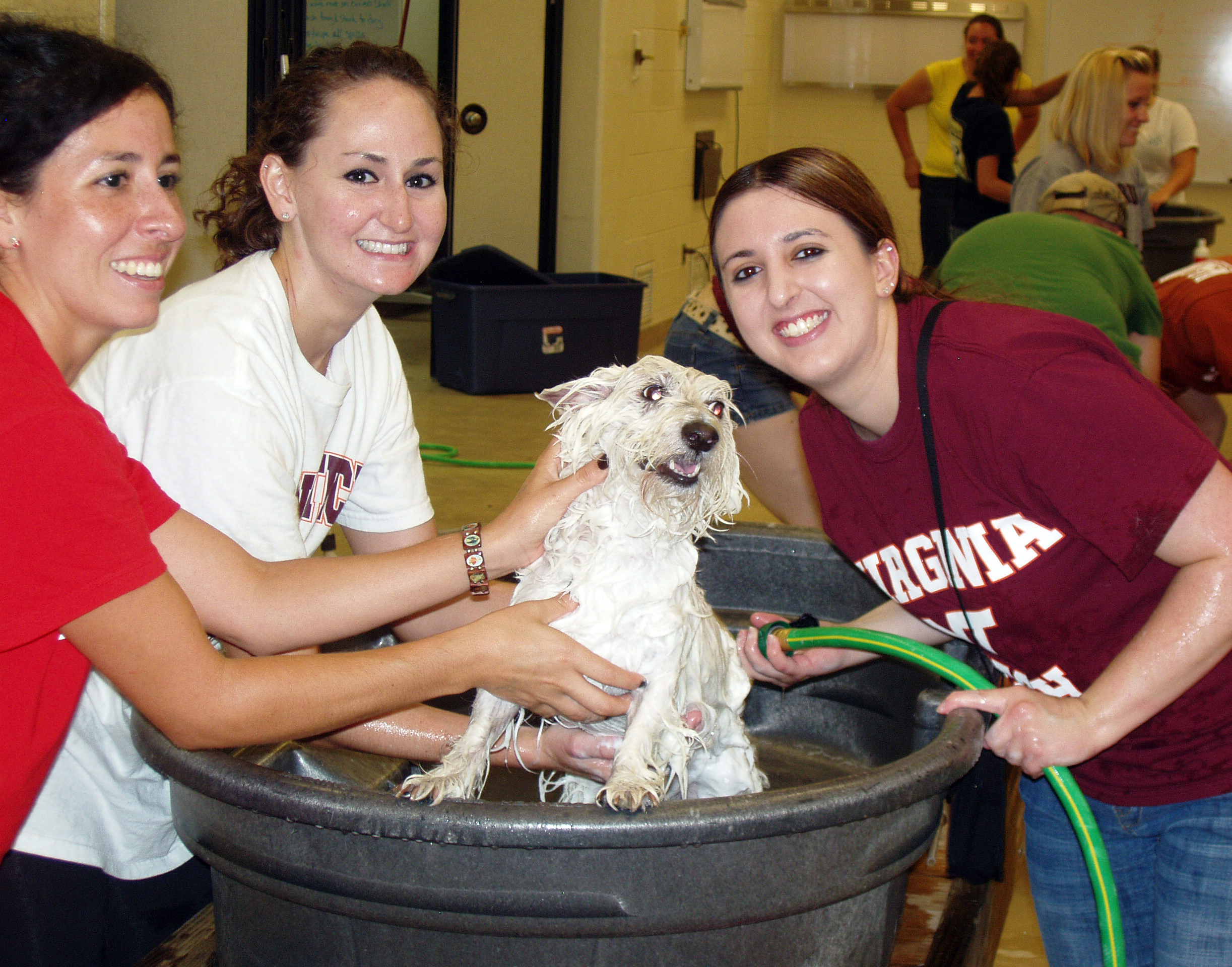 Veterinary students wash dog at community dog wash event.
