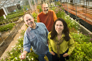 Jeff Burr, greenhouse manager; Richard Veilleux, professor of horticulture; and Suzanne Piovano, research specialist, worked with students on the potato breeding project in Virginia Tech's greenhouses.