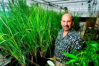 Scientists from Virginia Tech and the Institute for Advanced Learning and Research led by Barry Flinn, developed a new plant breeding method.
