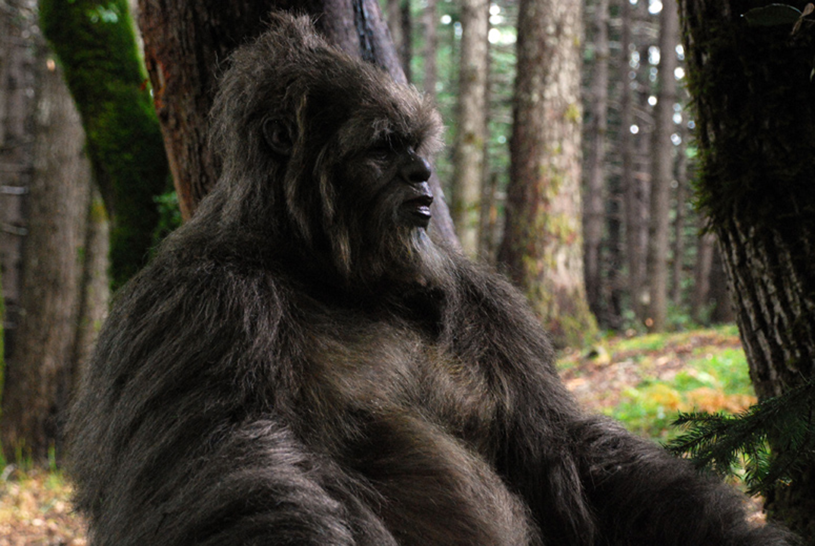 "Isaac C. Singleton Jr. plays a sasquatch in Chris Munch's film ""Letters From the Big Man."""