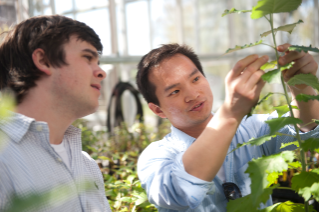 Graduate students John Herlihy, left, and Xiaoyan Jiaare are cloning genes for the production of transgenic poplar trees with new woody biomass characteristics that may improve their potential future use for biofuels.