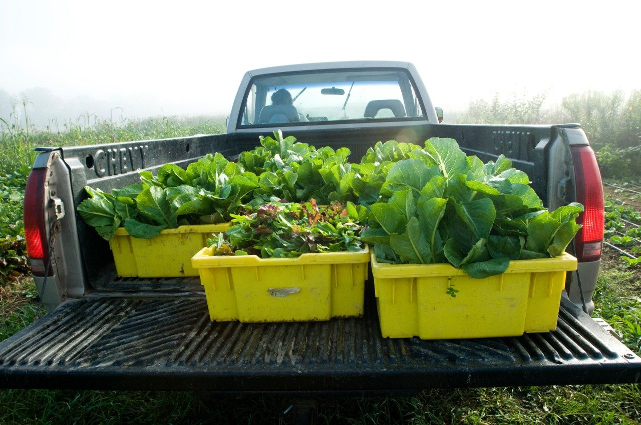 Summer is a busy harvesting time for Kentland Farm. Last season the farm produced over 300,000 pounds of food.