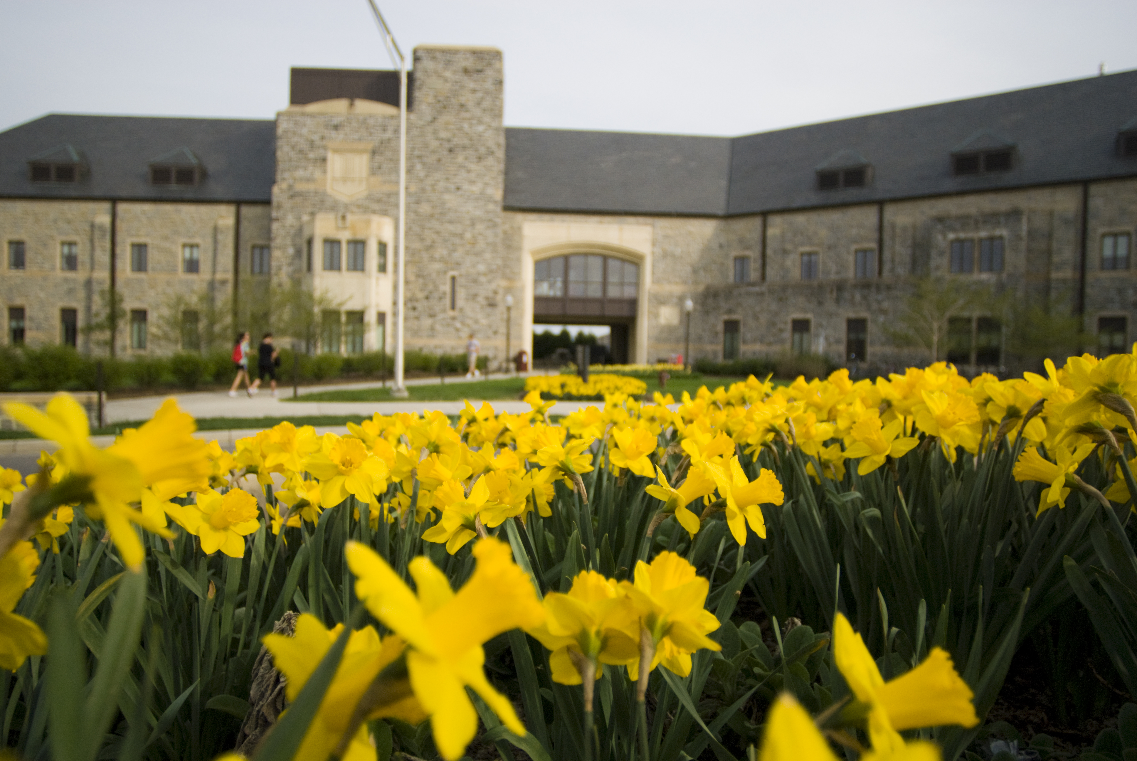 McComas Hall in the spring with daffodils