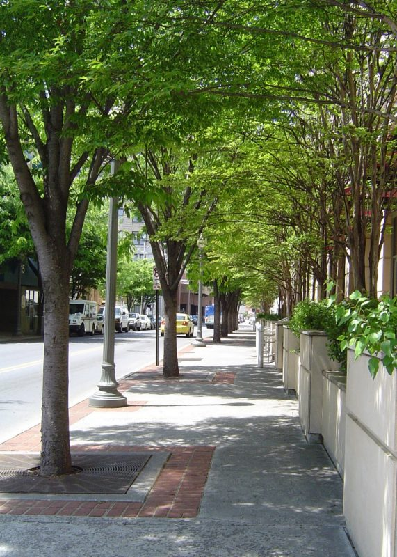 A tree-lined street in an urban area.