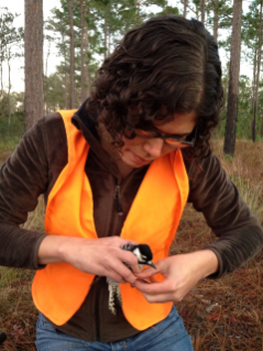 Michelle Jusino, Ph.D. Candidate with the Avian Ecology Lab at Virginia Tech, places a leg band on an adult red cockaded woodpecker. Birds have bands on both legs which tell researchers where the birds are from and can identify individual birds.