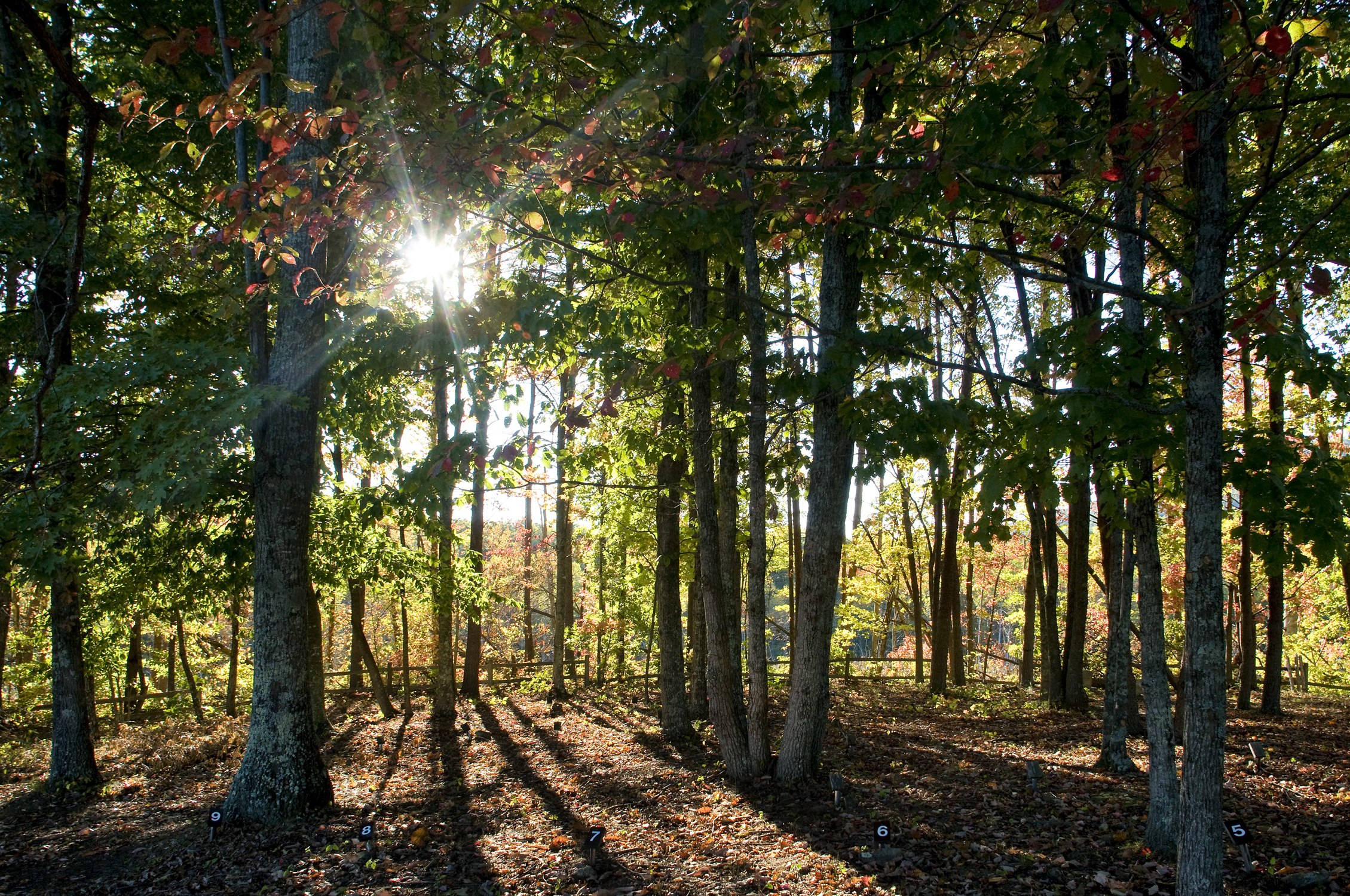 Sun shines through grove of trees.