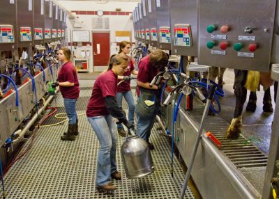 Dining Services partners with Dairy Science to provide Virginia Tech milk.