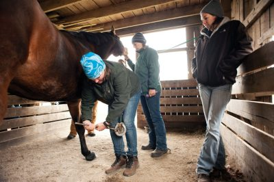 Participants in the Equine Field Service program provide in-field care to horses.
