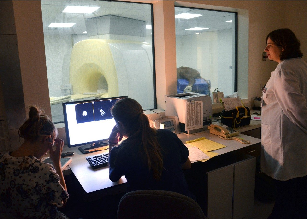 Hospital personnel monitor an MRI scan of a horse from a specialized control room.
