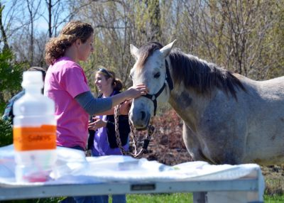 Vet student prepares horse for anesthesia