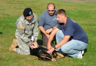 Dr. Bess Pierce, associate professor of community practice at the veterinary college, provides care for military working dogs in her role as a senior veterinarian in the U.S. Army Reserve Veterinary Corps.