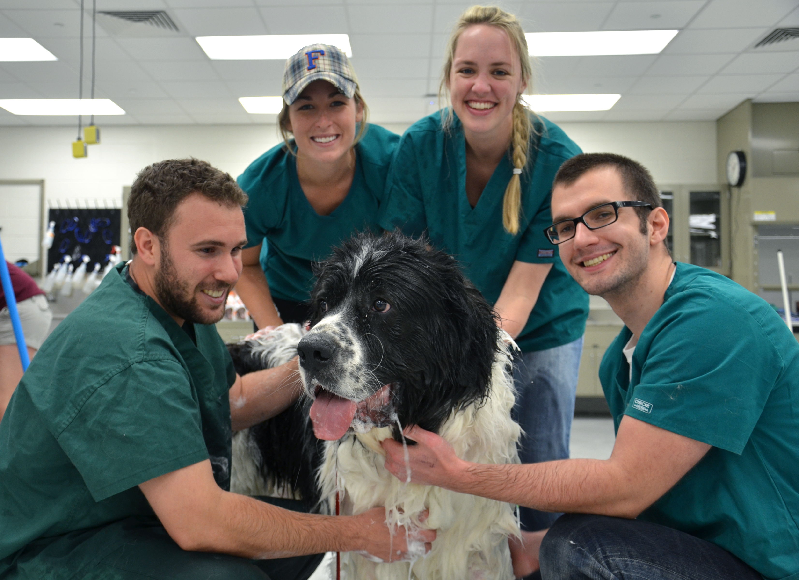 Veterinary students wash a dog at the Community Dog Wash.
