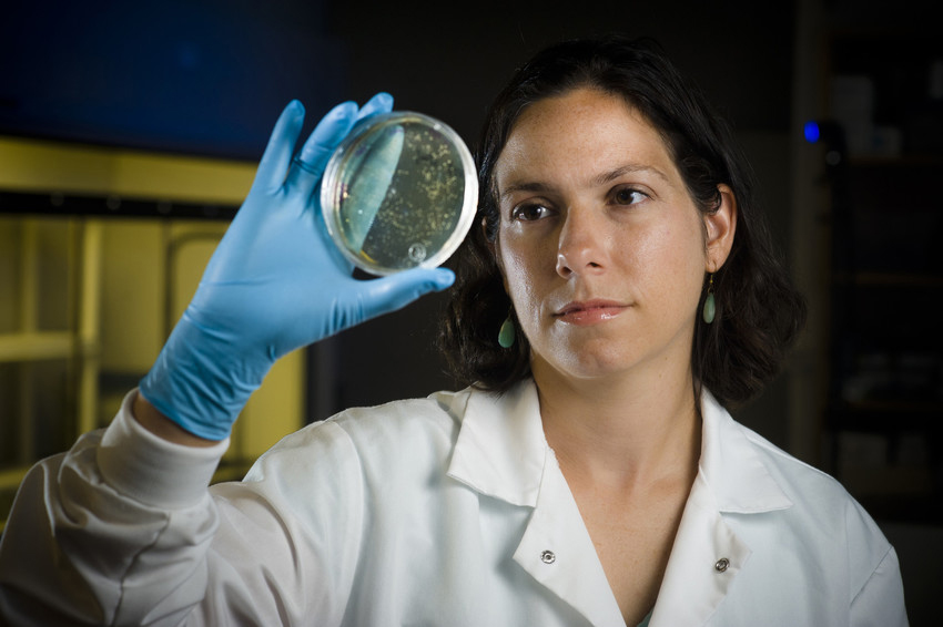 Amy Pruden examines a Petri dish