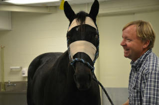Ferd Powell, Paco's owner, checks on him post-procedure of a cutting-edge treatment for sarcoids, an equine skin tumor. The treatment is called H-FIRE and delivers short bursts of electricity to the tumor.