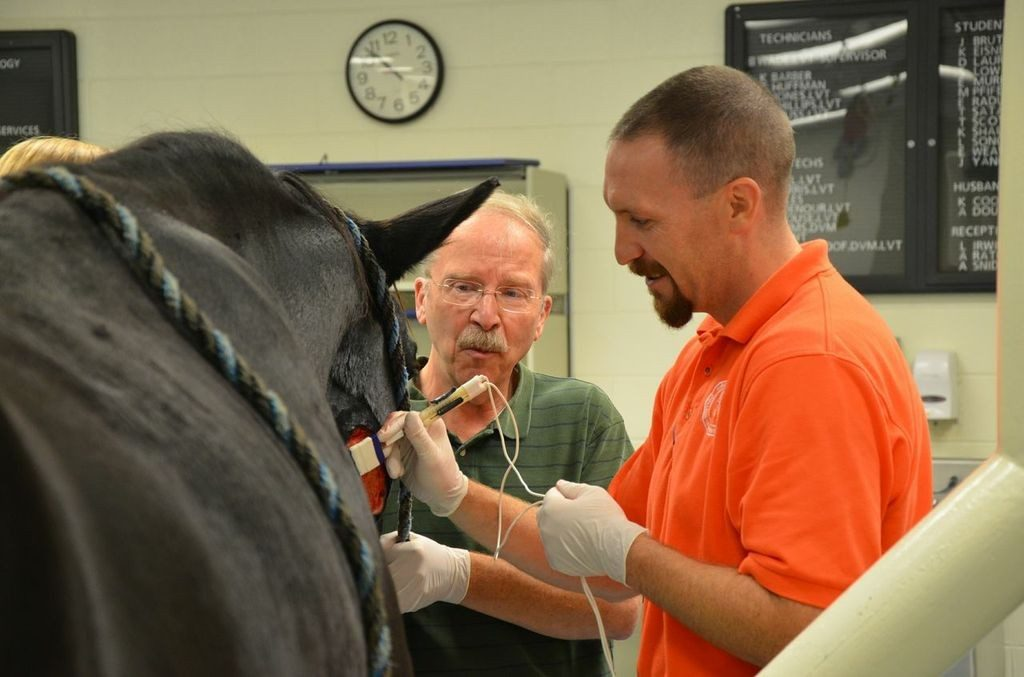 Paco waits patiently while Drs. John Robertson and J. Michael Cissell use a cutting-edge procedure to treat a sarcoid at the Virginia-Maryland Regional College of Veterinary Medicine.