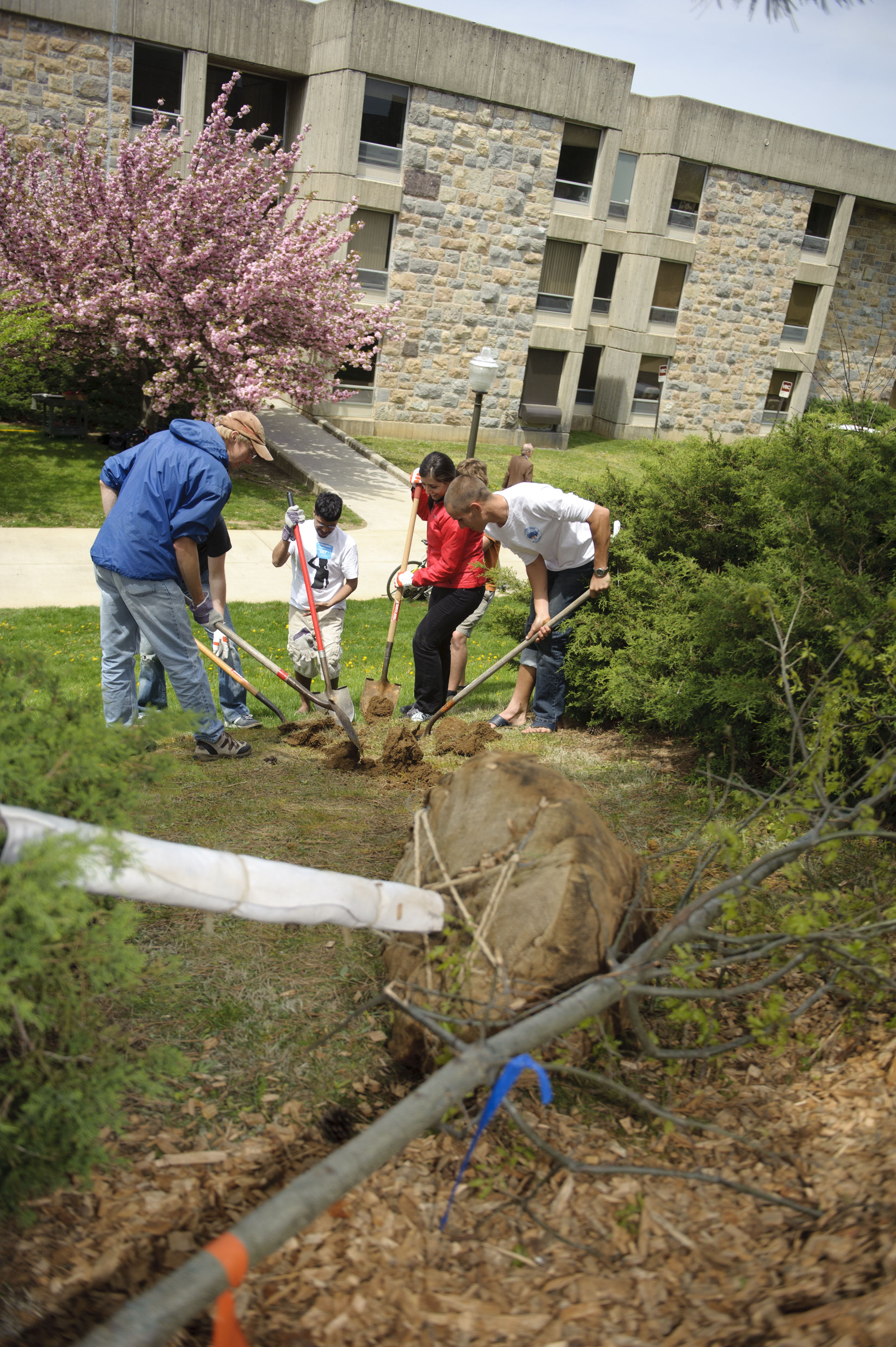 Students plant trees on campus.