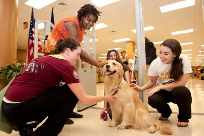 Hokies with a therapy dog