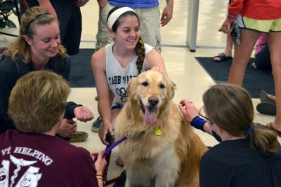 Therapy dog at Newman Library
