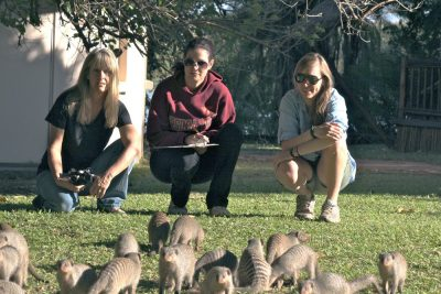 Kathleen Alexander, Sarah Jobbins, and Claire Sanderson with a group of banded mongoose.