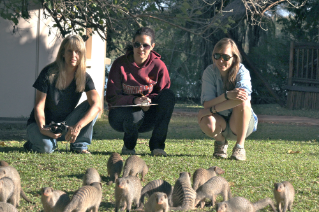Associate Professor Kathleen Alexander, left, and members of her research group, including postdoctoral associates Sarah Jobbins, center, and Claire Sanderson, right, study infectious disease in social carnivores such as the banded mongoose pictured here and other larger species such as the African lion and African wild dog.