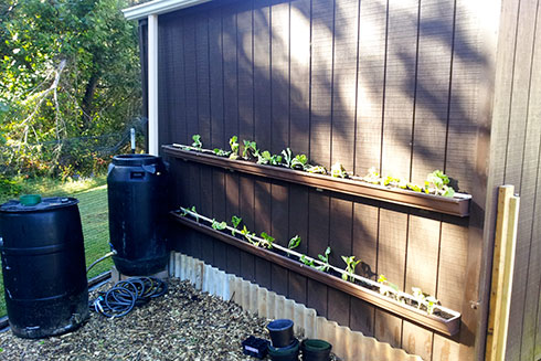An urban garden complete with a rain barrel, raised beds, and rain gutter gardening.