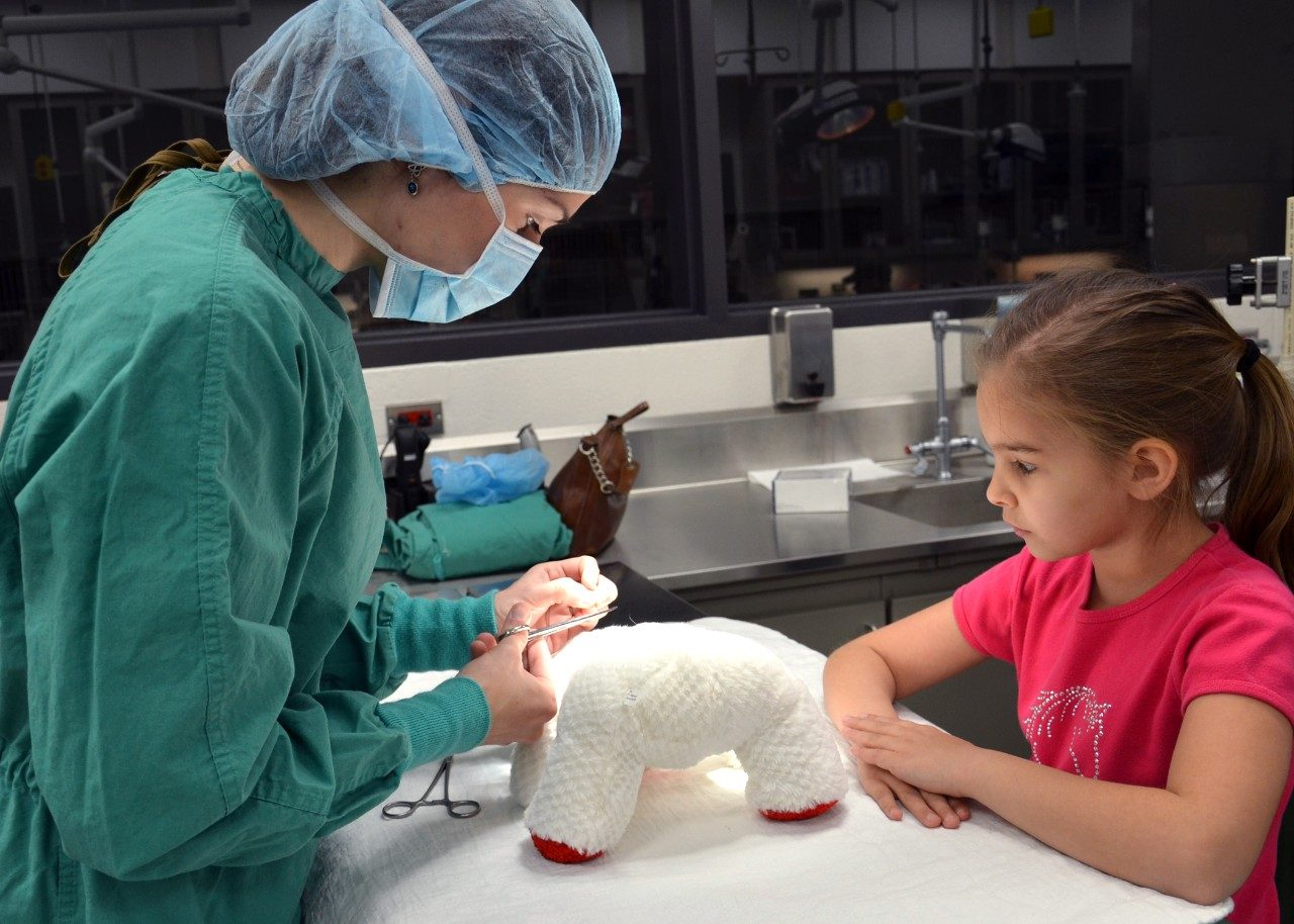 "The annual Open House attracts about 1,000 visitors to the veterinary college each year and features demonstrations and lectures for all ages. Pictured here, a third-year student ""surgically"" repairs a stuffed animal at last year's Teddy Bear Repair Clinic."