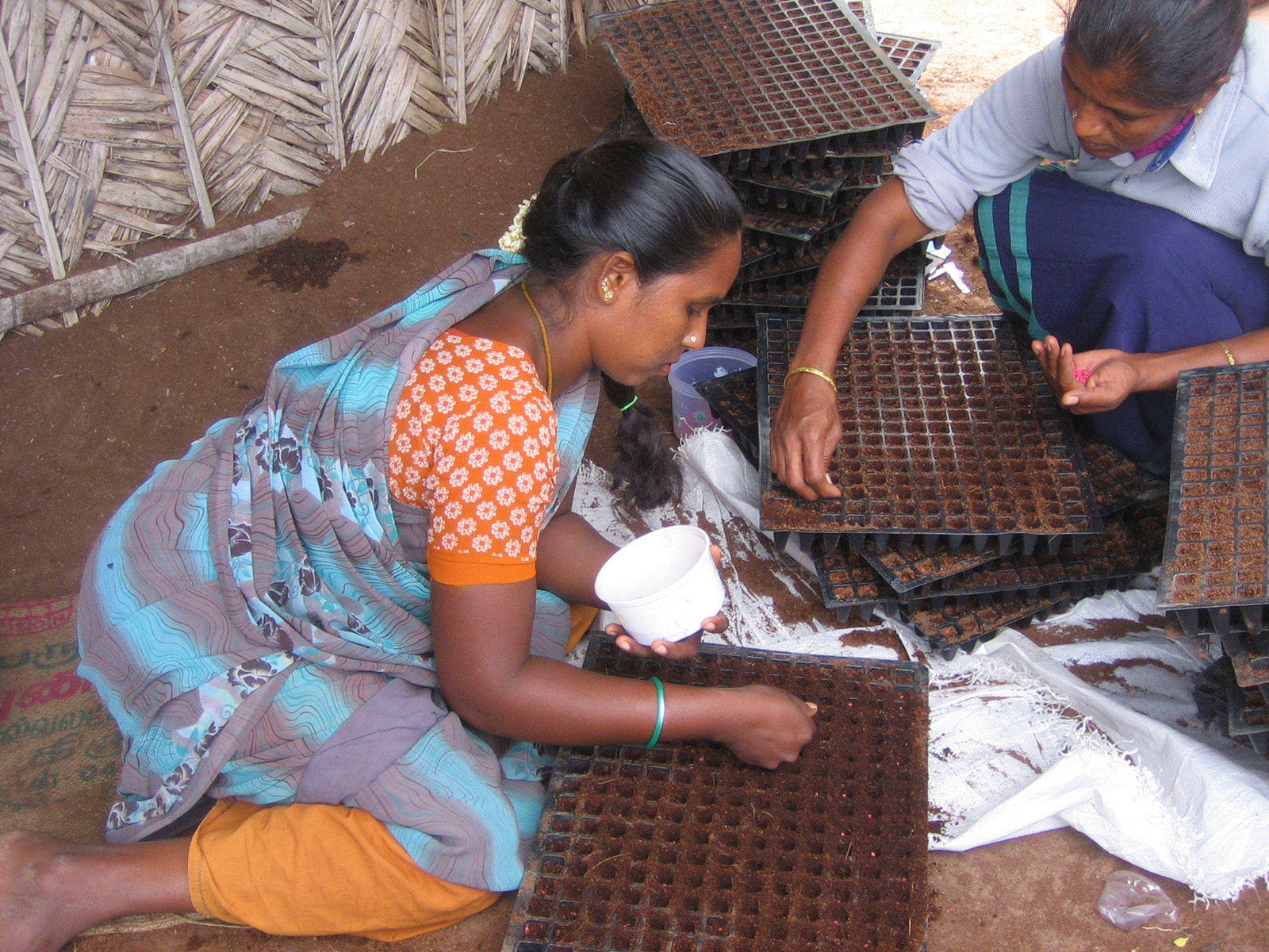 women plant seeds in seedling trays