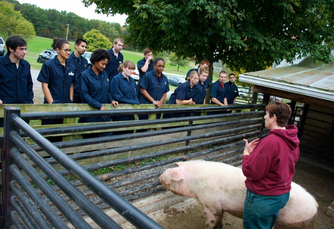 Dr. Sherrie Clark, associate professor of theriogenology in the Department of Large Animal Clinical Sciences, speaks about swine health on a farm tour with first-year veterinary students.