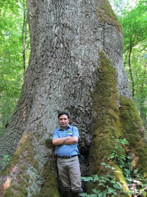 Kiomars Sefidi stands in front of an enormous old-growth tree in Iran's Kheyrud Experimental Forest. Image courtesy of Kiomars Sefidi.