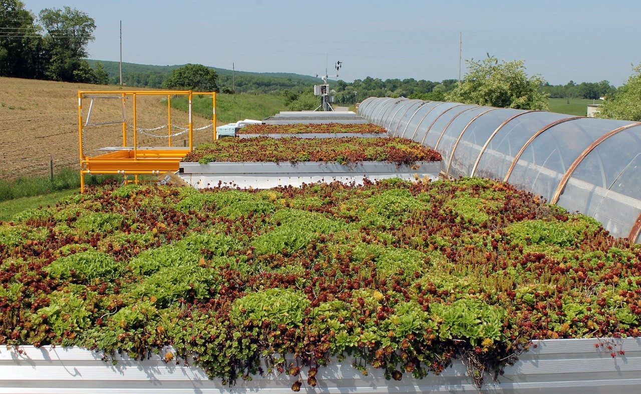 "Five platforms at the the Research and Demonstration Facility managed by the College of Architecture and Urban Studies were used to test various depths of ""green"" roofing. The thickest growth is in the foreground, with unplanted growth material and finally reflective roofing material in the distance."