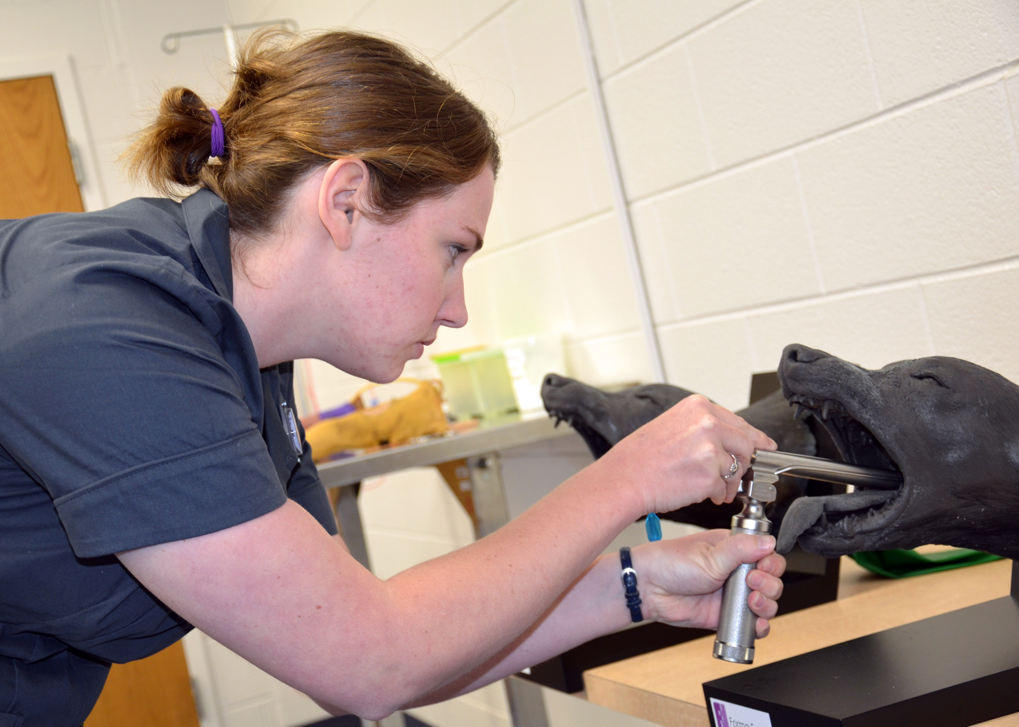 Sarah Repsher, a fourth-year veterinary student, practices intubation on a model at the veterinary college's new clinical skills lab.
