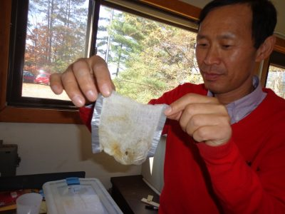 Research Scientist Zhangjing Chen displays a cheesecloth bag containing invasive snails. The snails were secured in bags before the researchers tested their vacuum-steam treatment for eradicating snails from shipments of imported tile.