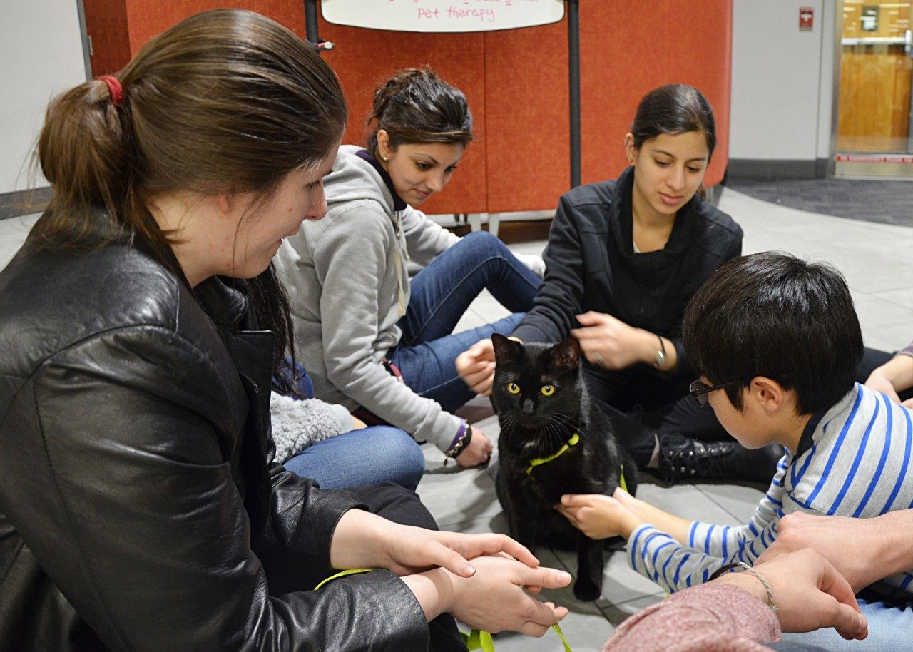 Therapy animals with Virginia Tech Helping PAWS demonstrate the importance of the human-animal bond with regular visits to the library and other parts of the community.
