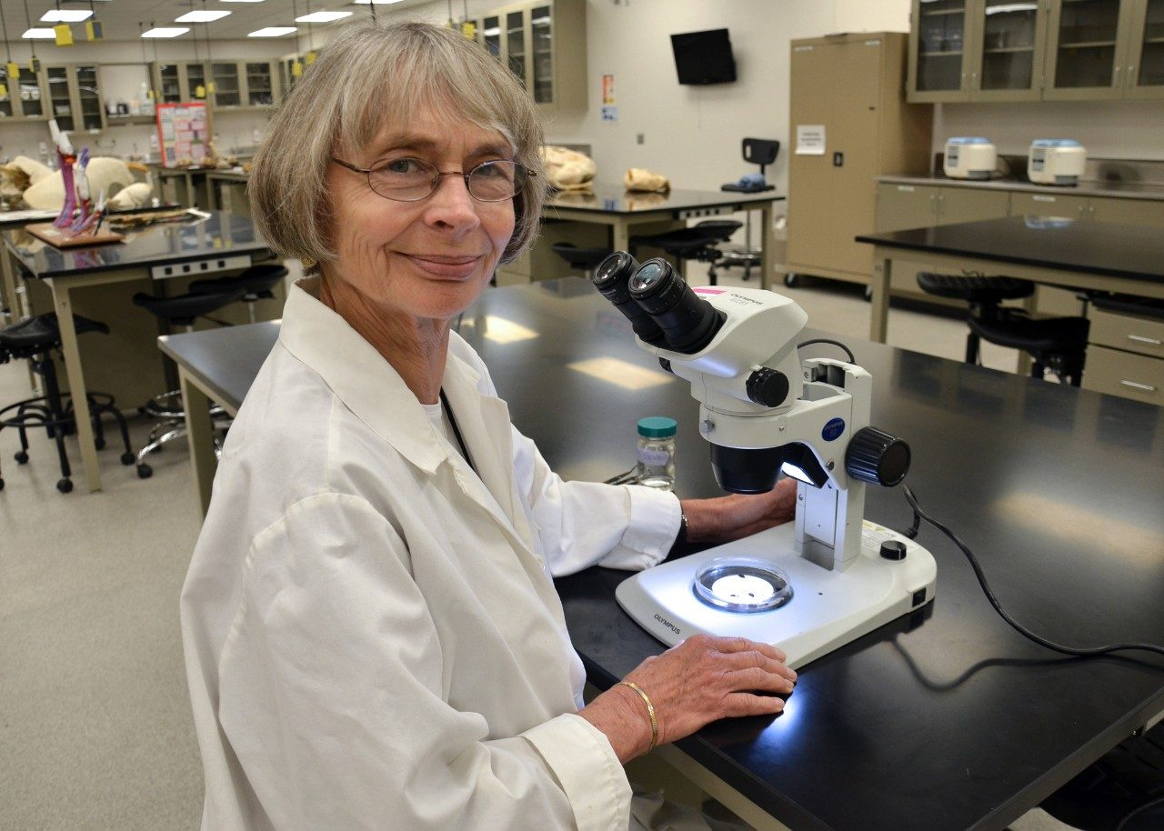 Dr. Anne Zajac, professor of parasitology in the Department of Biomedical Sciences and Pathobiology, looks at deer ticks through a microscope.