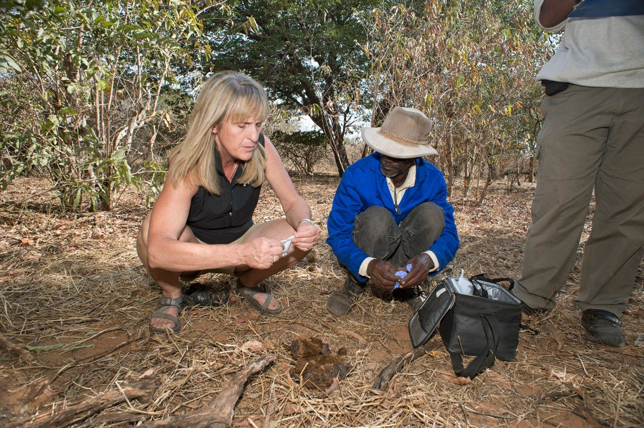 Kathleen Alexander, at left, talks with her research team member Cisco, one of the most experienced animal trackers in the Chobe district of Botswana, as they take sample animal droppings to analyze for studies on antibiotic resistance.