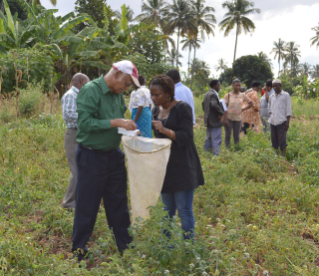 Muni Muniappan helps a workshop participant identify larvae of the tomato leafminer at a workshop on the destructive moth in Tanzania.
