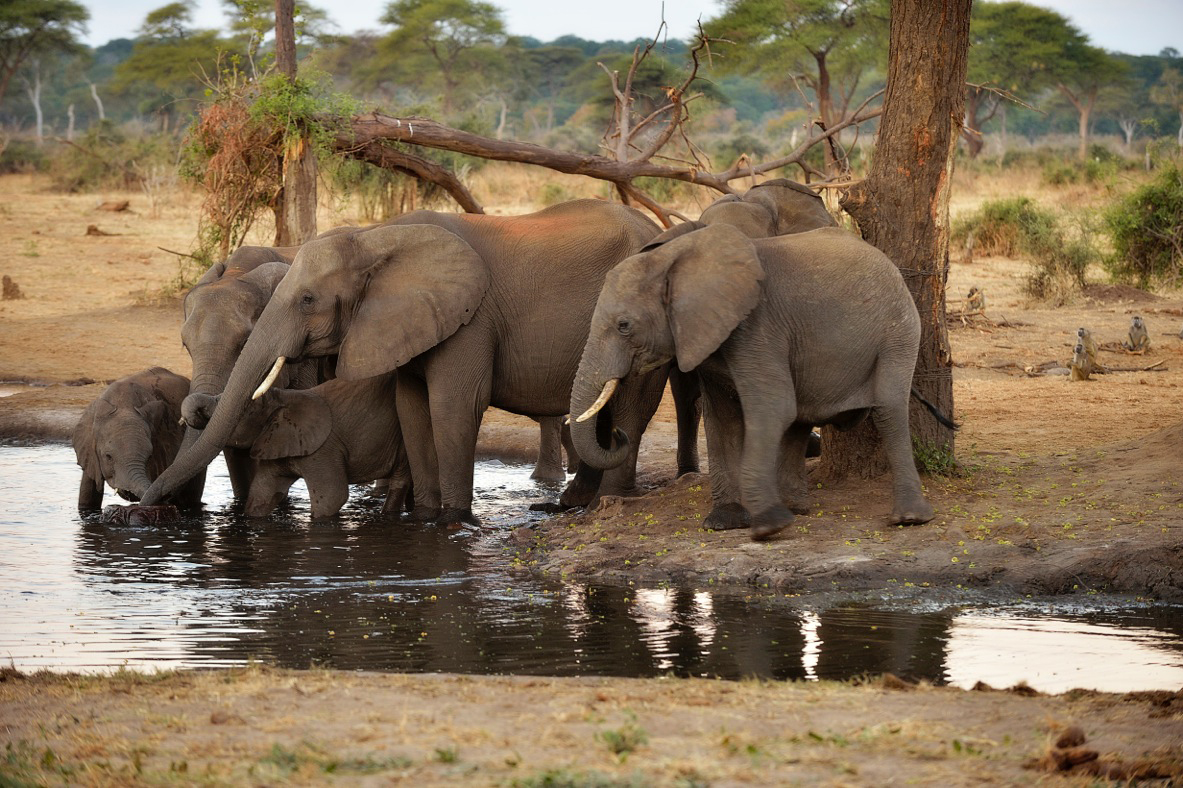 A group of elephants beside a river