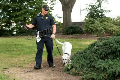 Virginia Tech Police Officer Rob Ogle is Toro's handler. Toro is a yellow Labrador retriever and a bomb detection dog. He and Ogle were certified by the Virginia Police Work Dog Association in June 2016.