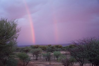 December through April marks the rainy season in Namibia.  Although it can make field work messy, it is an excellent time for birding and beautiful rainbows, such as the two pictured here.  Photo by Jelena Djakovic.