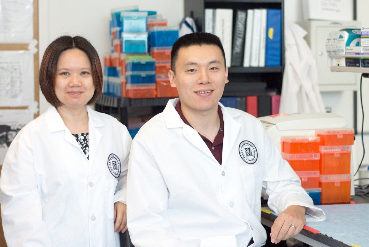 Xin Luo (left), assistant professor of immunology, and Ph.D. student Qinghui Mu (photo by Emily Koth)