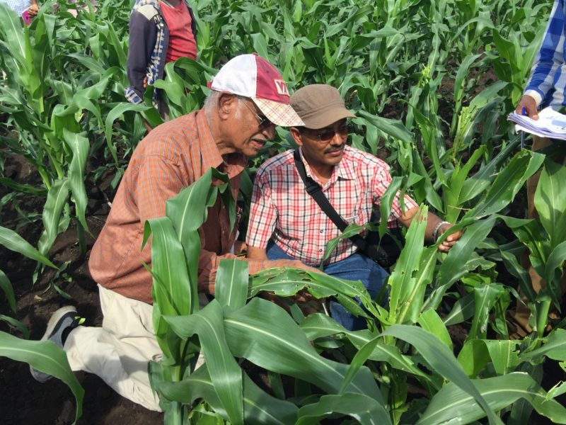 Scientists inspect pest damage in field