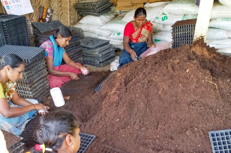women place seeds in seedling trays